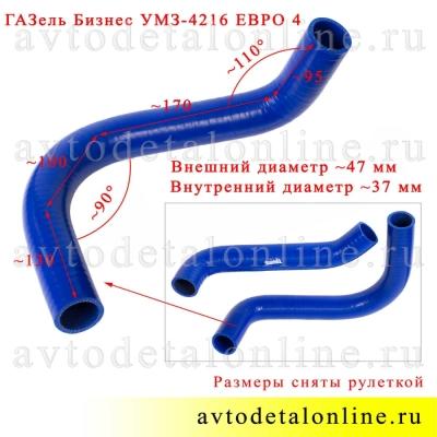 Патрубки радиатора ГАЗель Бизнес 3302 с УМЗ-421 Евро-4, силикон Технопартнер, отводящий нижний 33023-1303025
